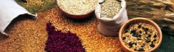 Real Food Part 5 – Grains